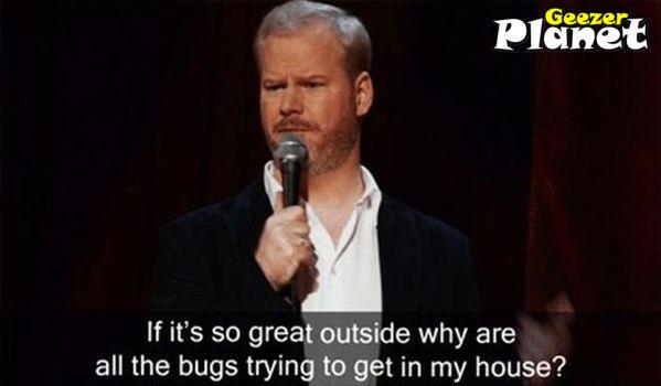 bugs inside house