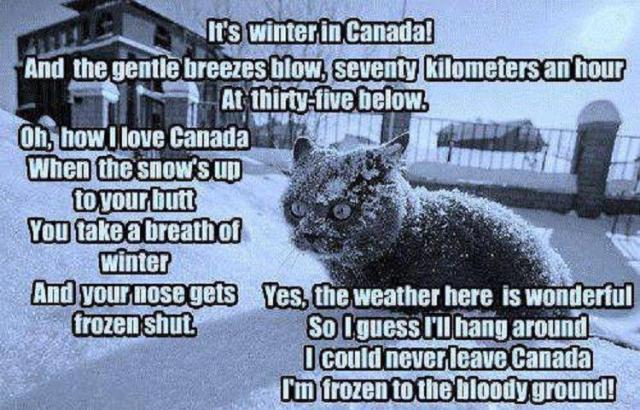 Canada winter cat frozen