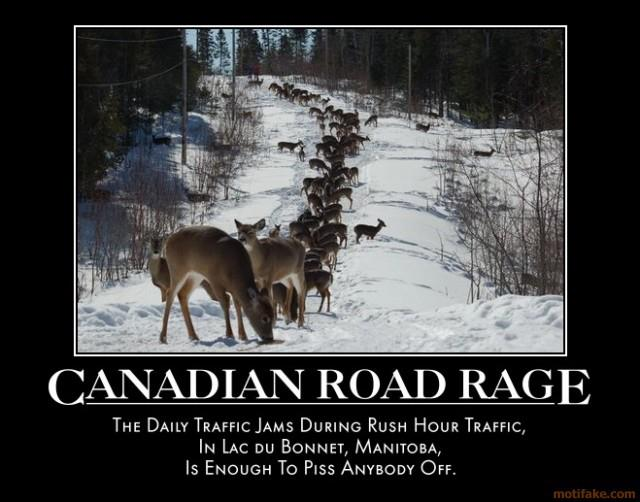 Canadian deer road rage