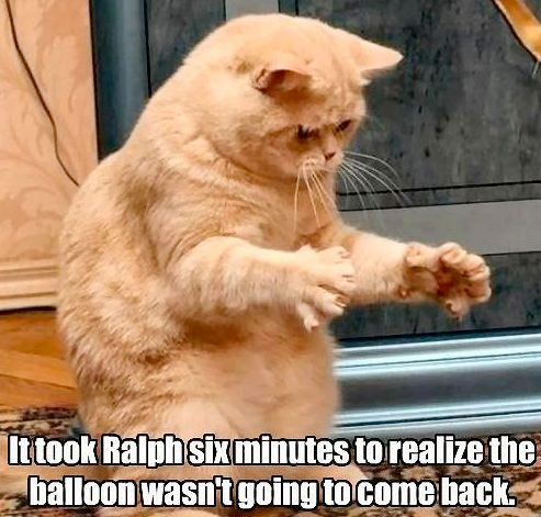 cat ballone gone