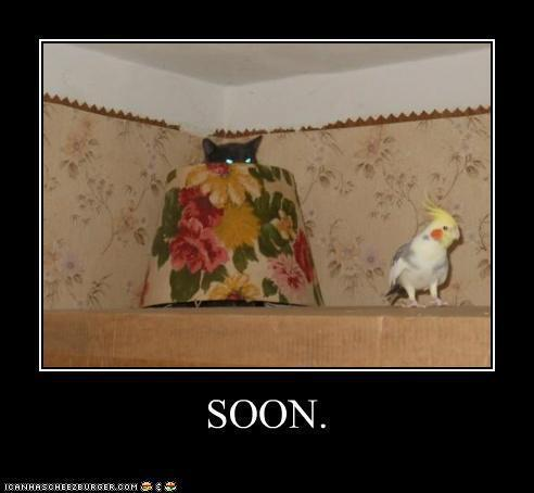cat parakeet soon
