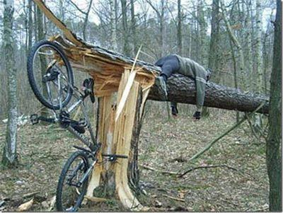 cyclist broke tree