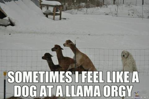dog llama orgy