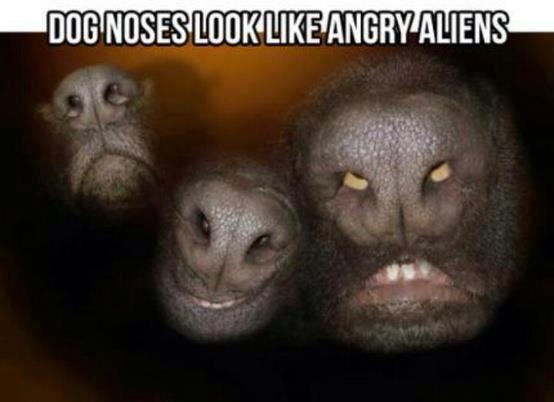 dog nose angry aliens