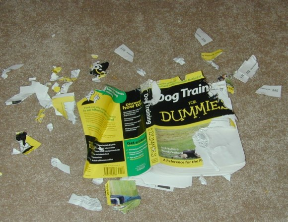 dog training 4 dummies