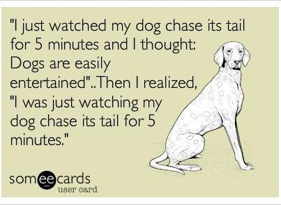 dogs chase tail