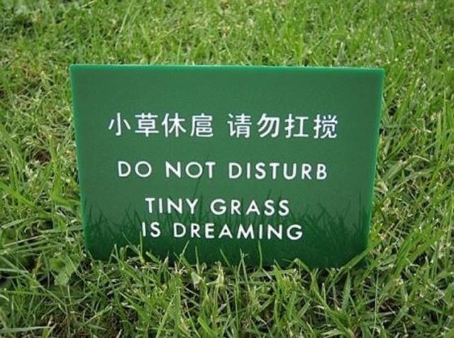 don't disturb grass dreaming
