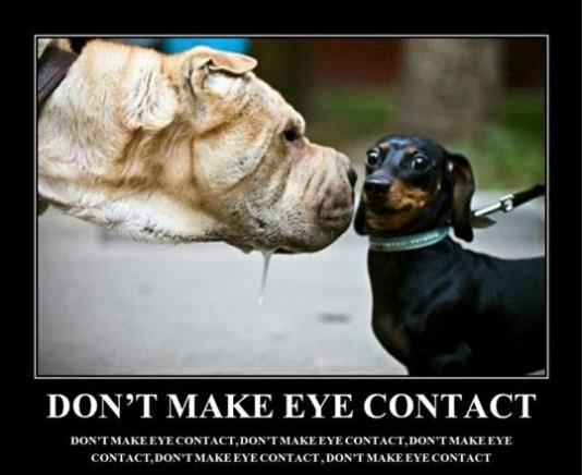 dont make eye contact