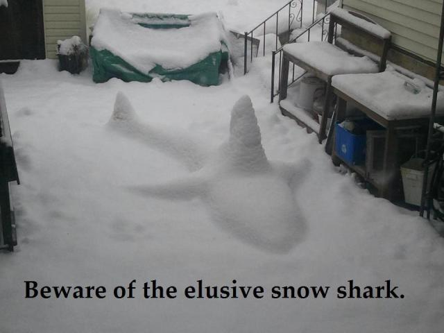 elusive snow shark