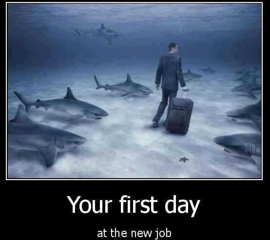 first day job