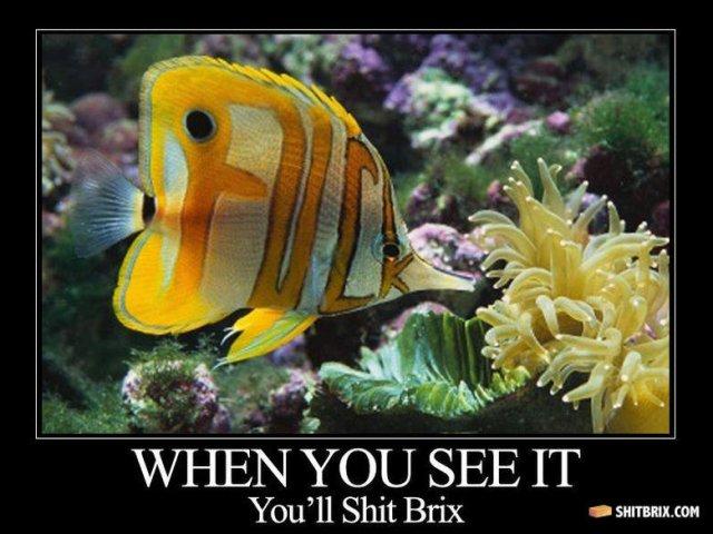 fuck fish