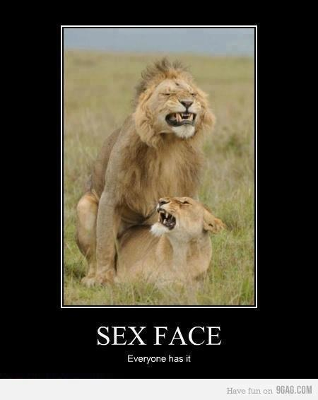 lion sex face