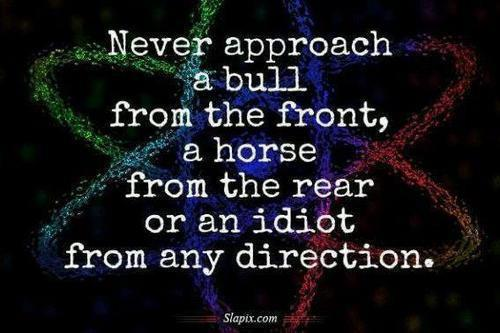 never approach bull horse idiot