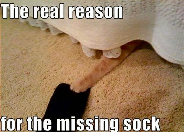reason missing sock