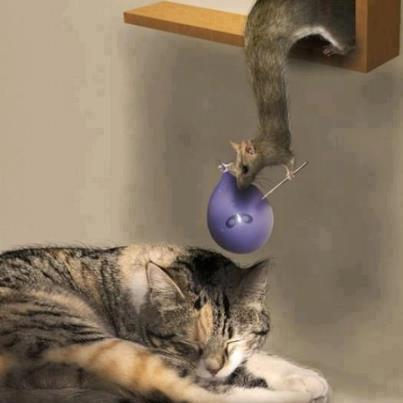 squirrel baloon cat