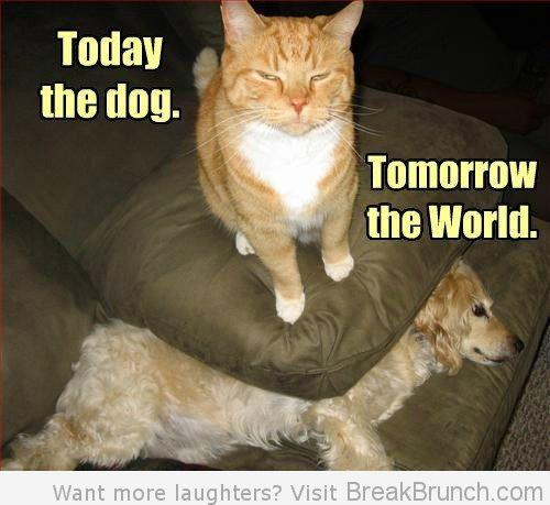 today dog tomorrow world