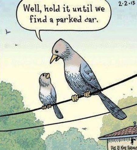 bird shit X