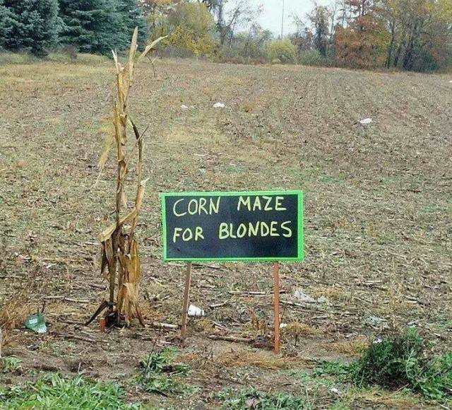 blonde corn maze X