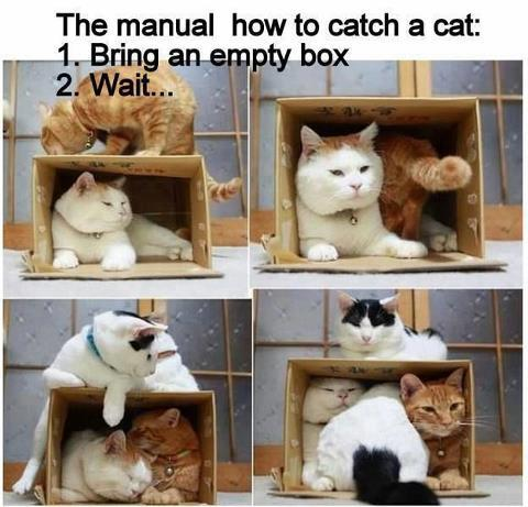 box catch cats X