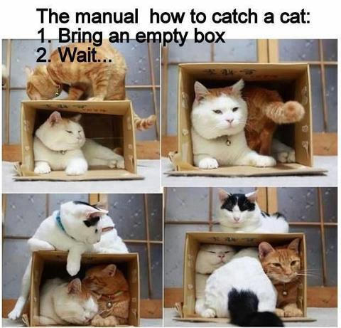 box catch cats X