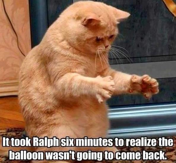 cat balloon gone X