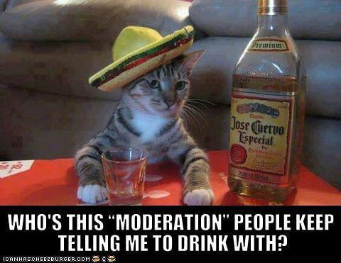 cat drink moderation X