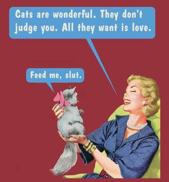 cats wonderful feed slut X