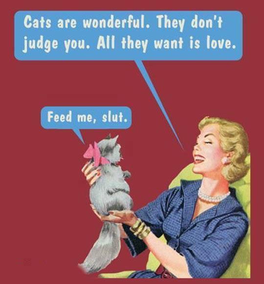 cats wonderful feed slut X