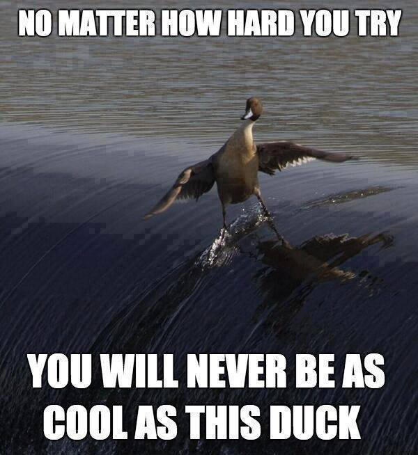 cool duck X