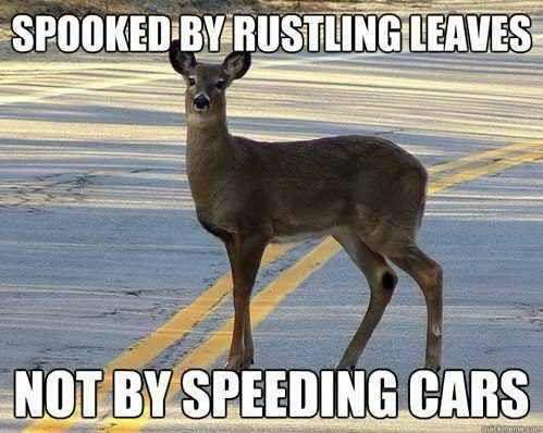 deer not spooked X