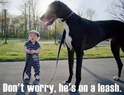 dog on a leash X