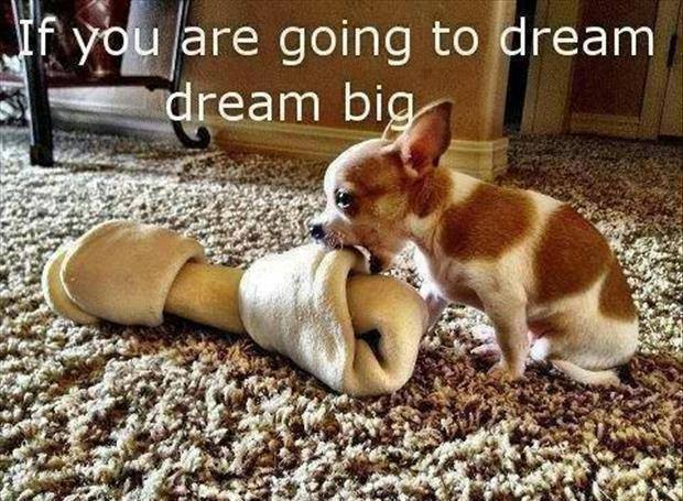 dream big X