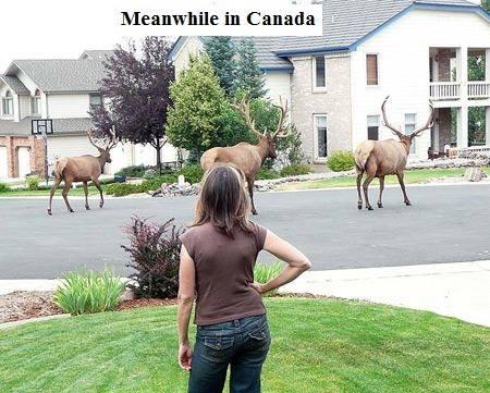 elk on street X