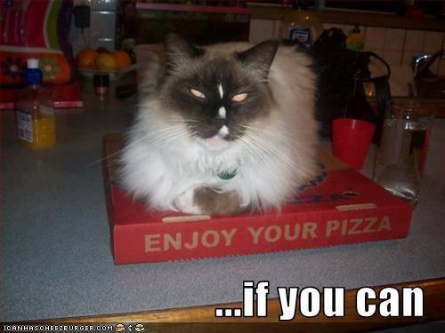 enjoy pizza X