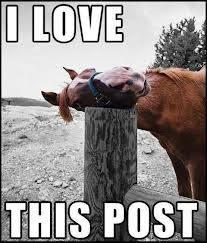 hosrse love post