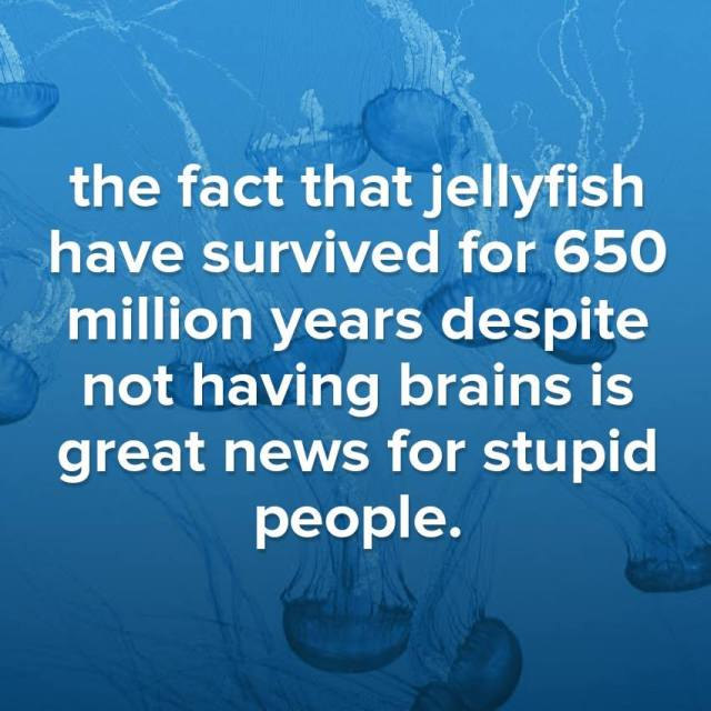 jellyfish no brains stupid X