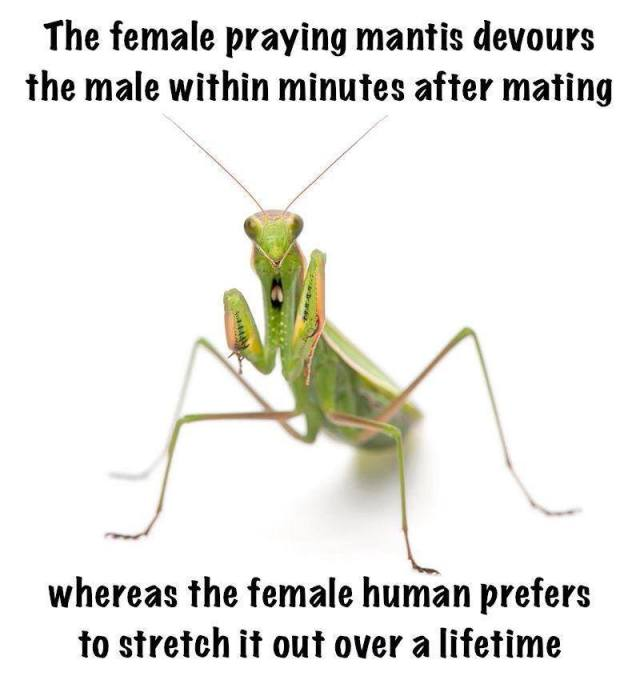 praying mantis X