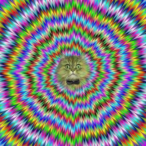 psychedelic cat X