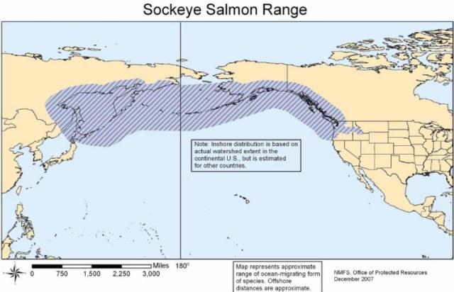 07 Salmon