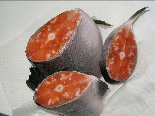 08 Tumors Salmon